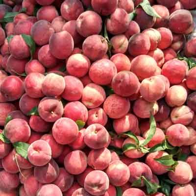 壁纸小清新粉色桃子