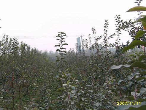 早熟桃树新品种有哪些?